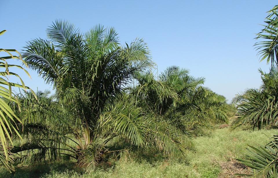 Palmu kasvaa, Neste kliittää