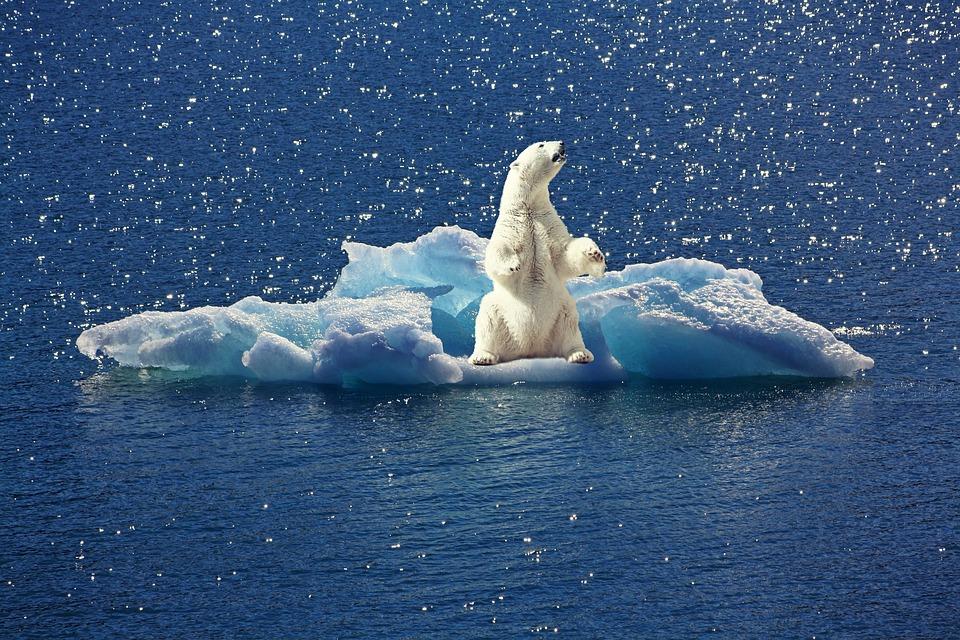 Jääkarhutkin peukuttavat Nibeä